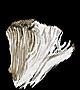 Elizabeth's Mushroom.png